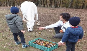 activities to do for kids in Umbria - umbria holiday villa