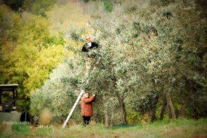 True Umbria - Olive Oil Tasting
